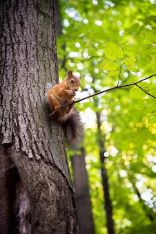귀여운 다람쥐 너트를 먹는 나뭇 가지에 앉아