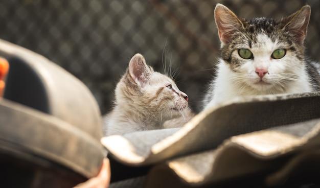 Милый бездомный котенок смотрит на свою маму, бездомные животные среди нас - концептуальное фото