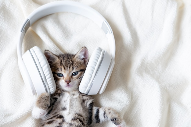 Cute striped cat kitten listening music in headphones on white bed. musical pets concept
