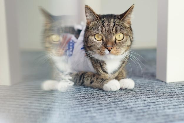かわいい縞模様の飼い猫は、子供の白い椅子の近くの白いカーペットの上に横たわっています