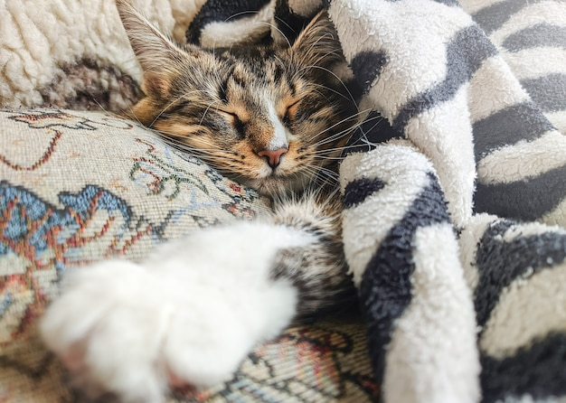 Cute striped kitten lying covered with blanket on bed while sleeping