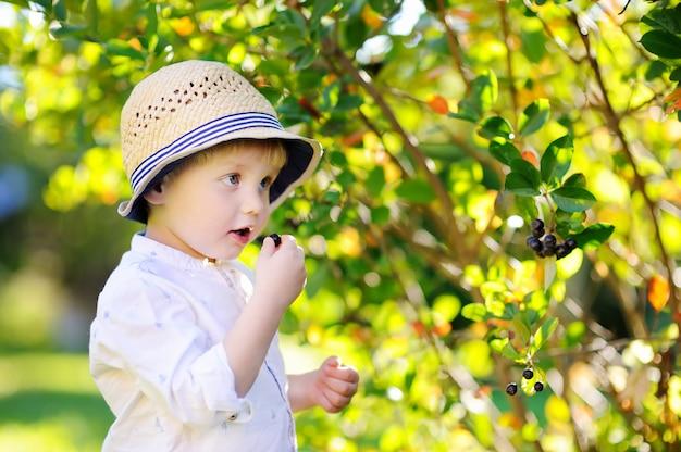 Cute stylish toddler boy picking black currants in domestic garden