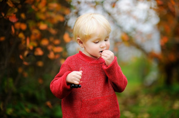 Cute stylish toddler boy picking black currants in domestic garden