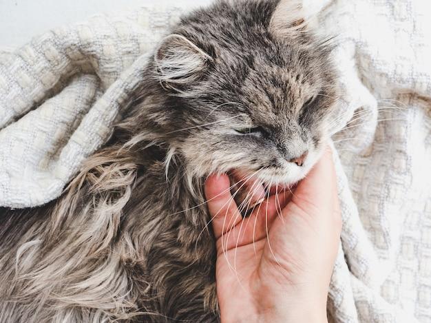 Cute, sweet kitten, lying on female hands