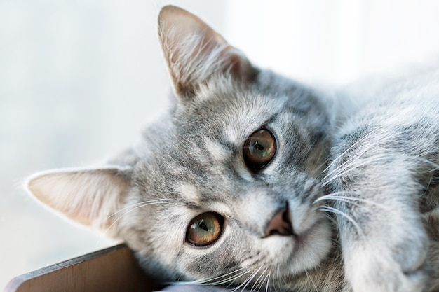 Милый милый маленький серый кот котенок портрет крупным планом глядя