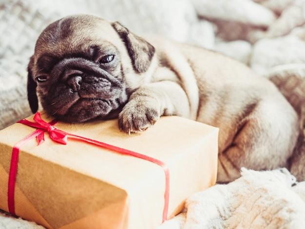 화창한 날에 창 근처 창틀에 누워 귀엽고 달콤한 강아지. 애완 동물 관리 개념
