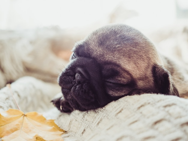 Cute, sweet puppy lying on the window sill near the window on a sunny day. pet care concept