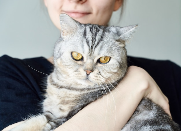 Cute tabby cat in arms of unrecognizable woman