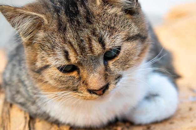 被写界深度が浅い、かわいいトラ猫がクローズアップ。