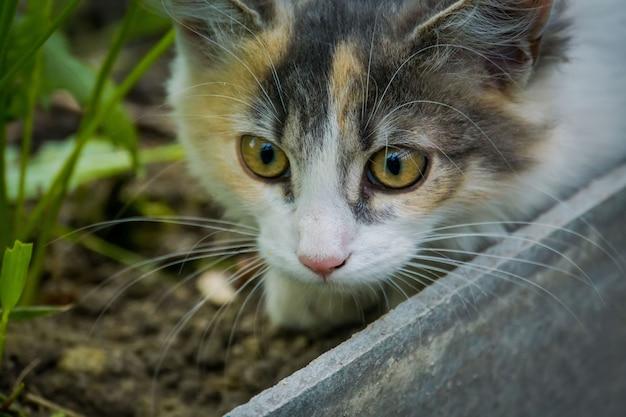 庭でかわいいトラ猫
