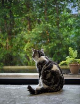かわいいぶち猫が居間に座る