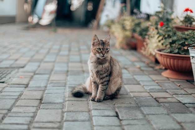 Cute tabby cat sits on the street near the house among flowers