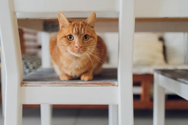 家のレトロでリラックスした素朴な木製の椅子に座っているかわいいぶち猫。