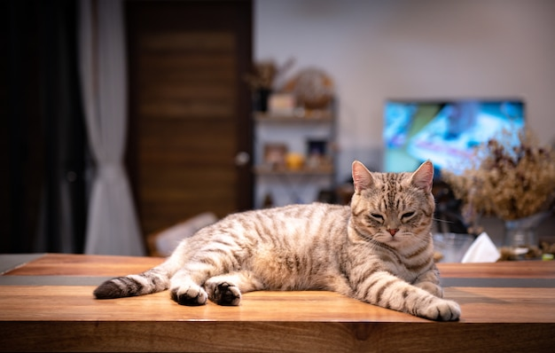 Cute tabby cat sleep on wooden counter in living room in night time