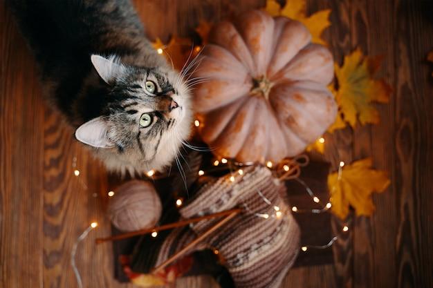 木の床で熟したカボチャとかわいいトラ猫