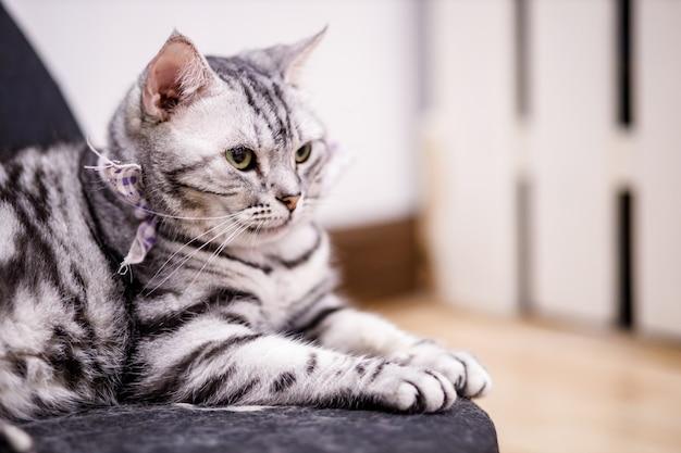 Симпатичный полосатый кот с желтыми глазами и длинными усами. макро портрет красивой кошки. расслабленная домашняя кошка дома.