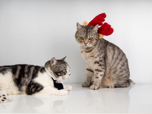 白い背景の上のクリスマスシーズンに黒い蝶ネクタイと赤いantlerを身に着けている美しい黄色の目を持つかわいいぶち猫