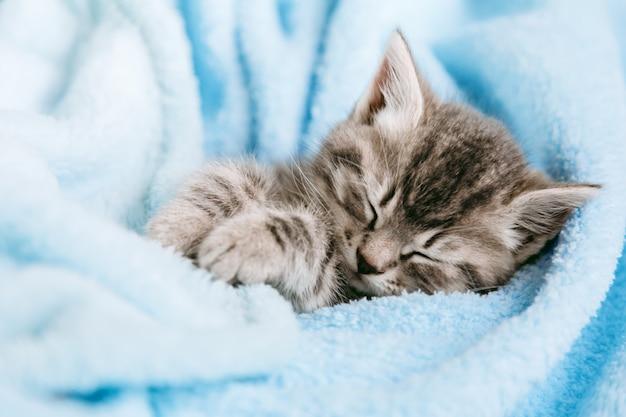 Симпатичный полосатый котенок закрыл глаза и вздремнул расслабиться. домашнее животное кота малыша. маленький серый полосатый котенок млекопитающего на цветном синем пледе. пушистый кот с усами.