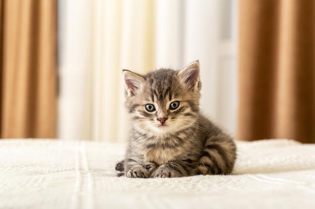 Милый полосатый котенок лежит на белом пледе дома. новорожденный котенок, baby cat, kid животных и кошек концепции. домашнее животное. домашний питомец. уютный домашний котик, котенок.