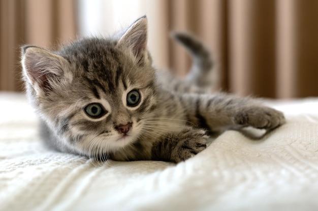 Милый полосатый котенок лежит на белом пледе дома. новорожденный котенок, котенок, детское животное