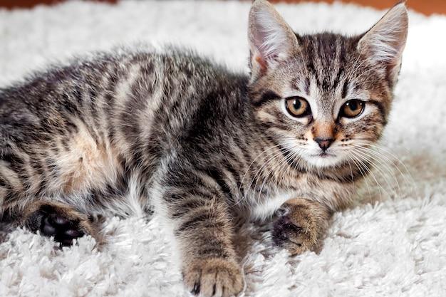 Cute tabby kitten lying on white fluffy carpet