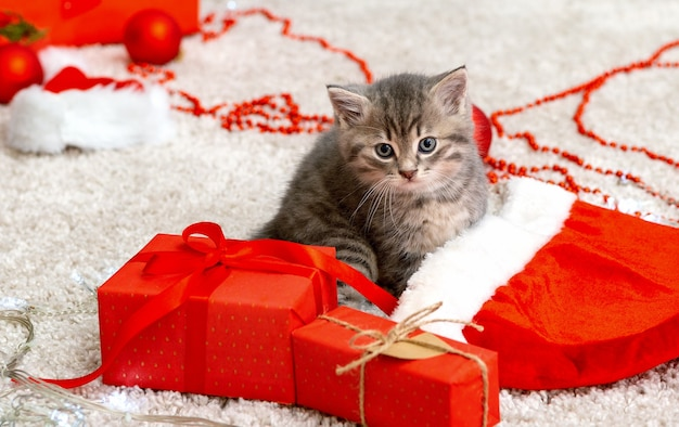 Милый полосатый котенок возле рождества шляпа санта-клауса гирлянда огни рождественские подарки декор симпатичный котенок