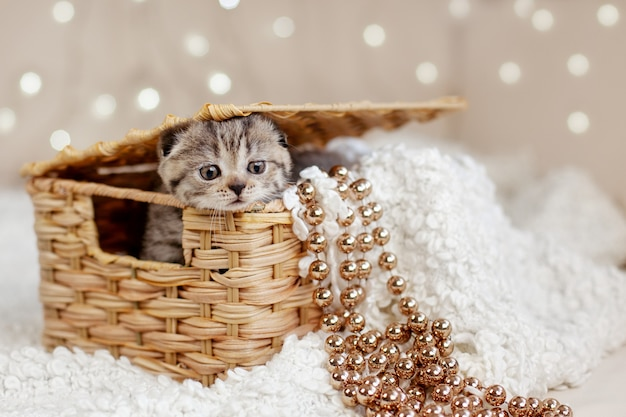 A cute tabby kitten peeks out of a wicker basket, their baskets dangling golden beads. christmas card, holiday, gift. christmas and new year concept