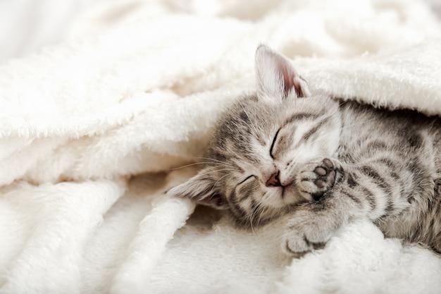 Милый полосатый котенок спит на белом мягком одеяле. кошки дремлют на кровати в уютном доме.