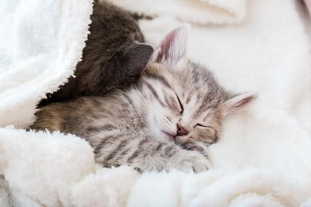 Милый полосатый котенок спит на белом мягком одеяле. кошки дремлют на кровати. кошачья любовь и дружба в день святого валентина. комфортные питомцы спят в уютном доме.