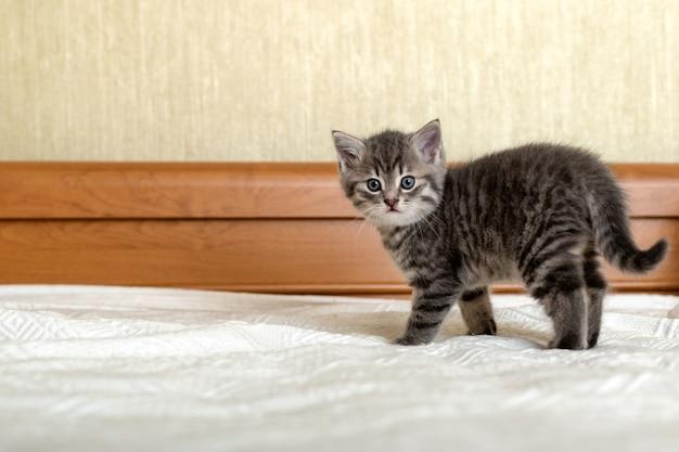 Милый полосатый котенок, стоящий на белом пледе дома. новорожденный котенок, baby cat, kid животных и кошек концепции. домашнее животное. домашний питомец. уютный домашний котик, котенок. скопируйте пространство.