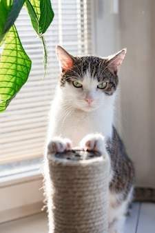 고양이 나무, 화창한 날과 귀여운 얼룩 무늬 고양이. 배너, 복사 공간, 가까이, 배경. 사랑스러운 국내 애완 동물 개념.