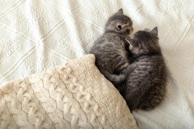 흰색 격자 무늬에 누워 귀여운 줄무늬 고양이