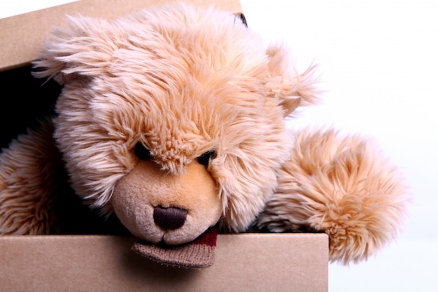 Cute teddy bear in the gift box