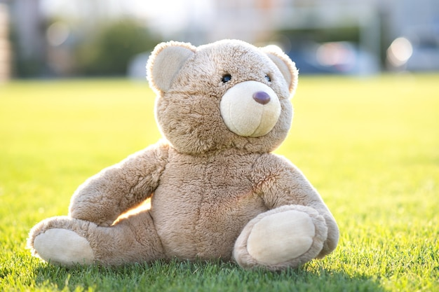 Cute teddy bear toy sitting on green grass in summer.