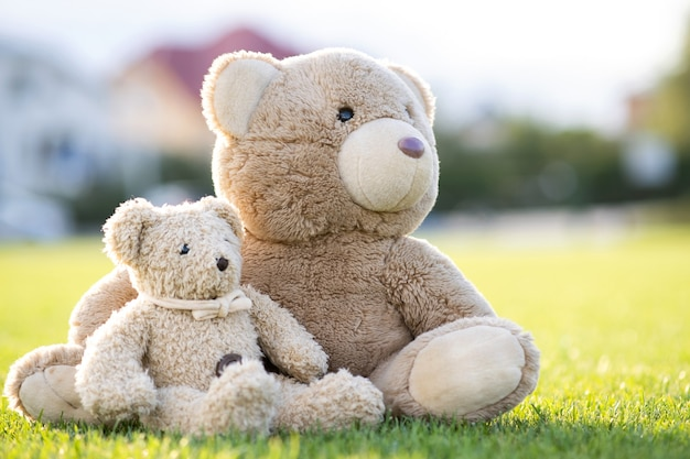 Cute teddy bears toys sitting on green grass in summer.