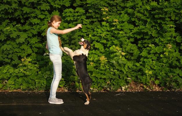 Симпатичная девочка-подросток обнимает щенка австралийской овчарки трех цветов летом. обучение. стоя на двух лапах. владелец. обработчик. концепция ухода за домашними животными. любовь и дружба между человеком и животным.