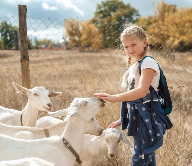 ヤギの農場でヤギをなでるかわいい10代の少女