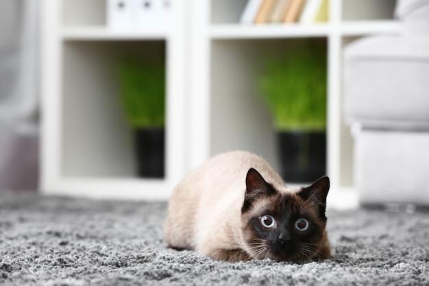家のカーペットの上に横たわっているかわいいタイの猫