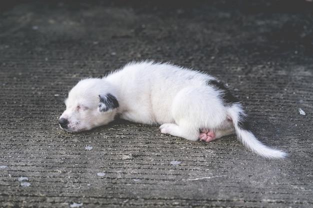 横になっていると地面で遊ぶかわいいタイの子犬