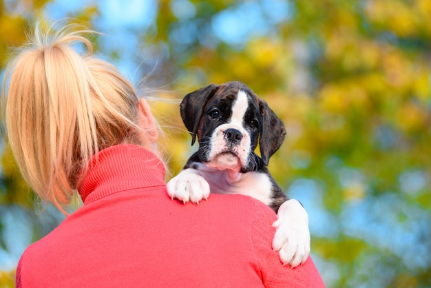 Cute tiger puppy breed boxer on the shoulder of the girl.