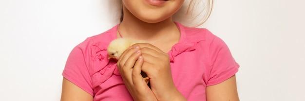 Милый крошечный новорожденный желтый цыпленок в руках девочки ребенка.