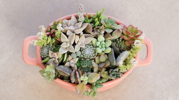 Cute tiny succulent plants in pink pot close up top view