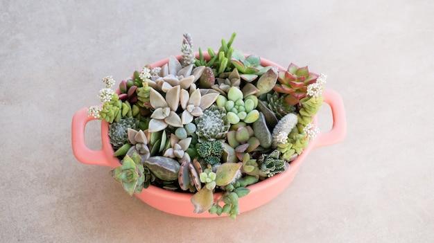 Cute tiny succulent plants in pink pot close up