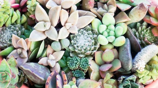 Cute tiny succulent plants in pot close up wallpaper