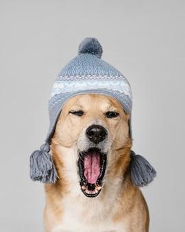 Милая усталая собака в вязаной шапке