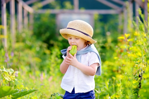 Cute toddler boy  in straw hat eating fresh organic cucumber in domestic garden