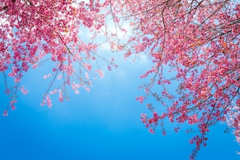 Cute tree branches with pink flowers