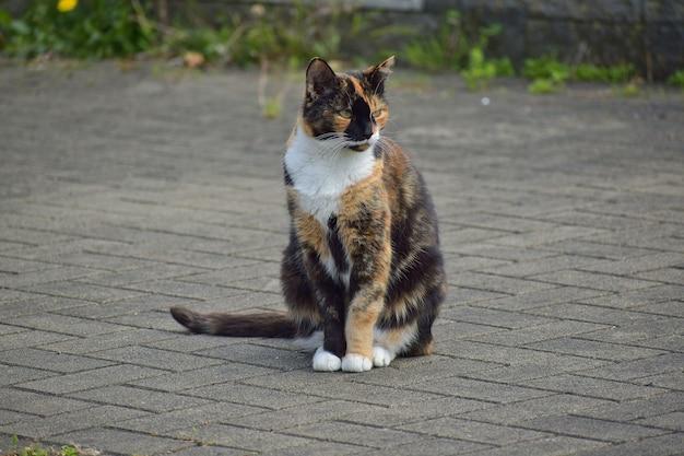 Милый трехцветный ситцевый кот сидит на земле
