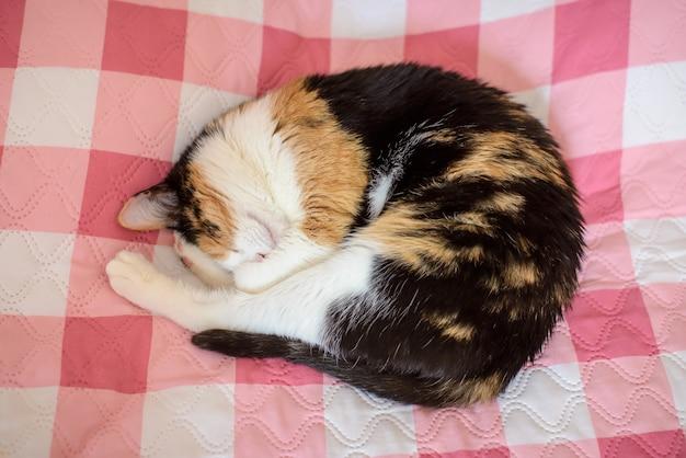 Милый трехцветный кот спит на кровати на клетчатом покрывале