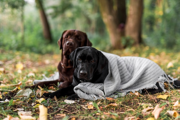 Cute two dogs lying on grass with scarf at park